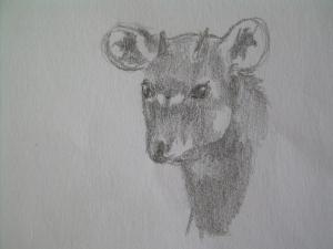 Kudu kid